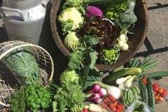 haneborg-grønnsaker_1377