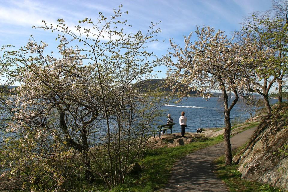 Vårstemning i badeparken. Oscarsborg kan sees i bakgrunnen. Foto: Pål Mørk.